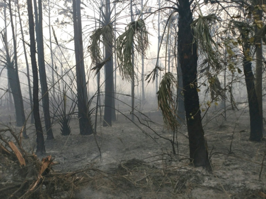 A brush fire in the Lake Washington area of Melbourne
