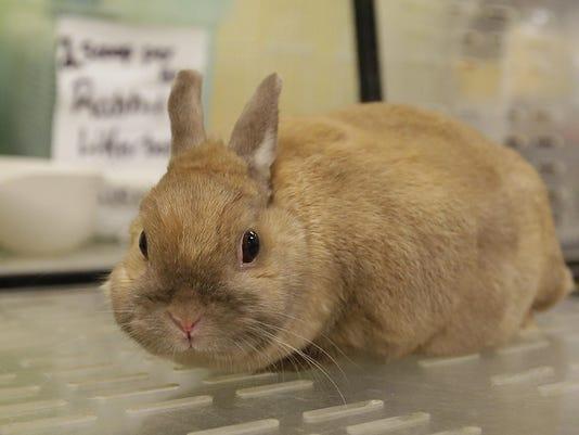 FON 080715 rabbit potw