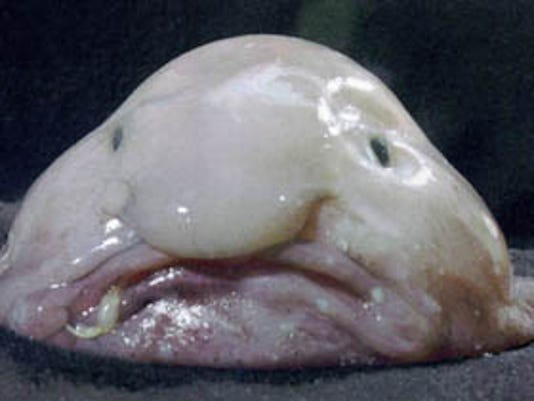 Eight Of The Worlds Ugliest Fish