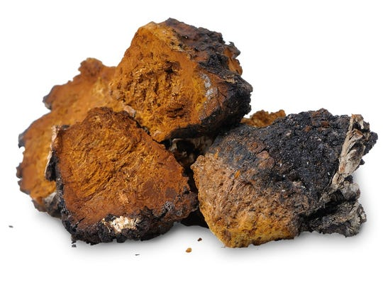 "Chaga is considered the ""king of mushrooms"" and can help boost the immune system by alkalizing the blood and breaking up longstanding infections."