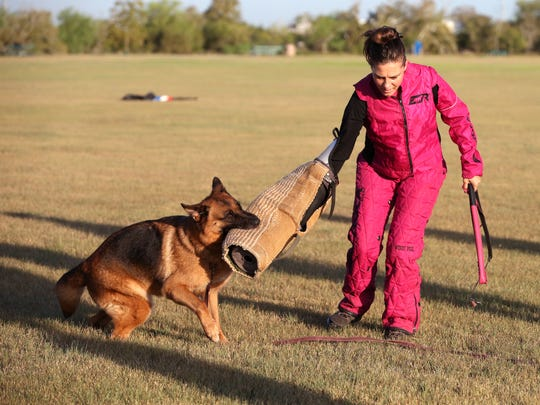 Windy Pool, training director and founder of C3 Hundesport, trains a dog Tuesday, Aug. 22, 2017 at Labonte Park.