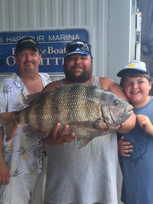 Capt. Joseph Crowley holds a citation sheepshead weighing in at 14 pounds, 6 ounces caught at the Outer Wall on sand fleas.