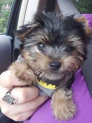 Jada Padilla Cortes, 14, received a teacup Yorkie puppy