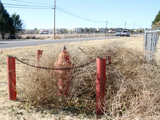 A fire hydrant sat mired in tumbleweeds in north Carlsbad