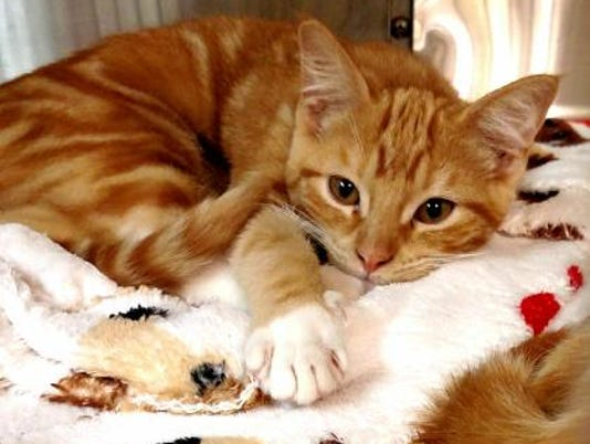 Pet of the day