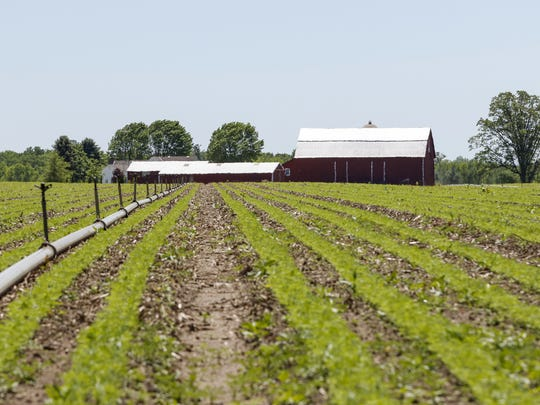 This part of the Wilfert Farm has been in the family since 1877. Pictured June 6 in Two Rivers.