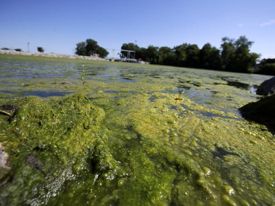 Algae clogs the waterway near the Menasha lock last summer.