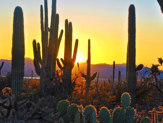 Sunset at Saguaro National Park near Tucson Arizona.