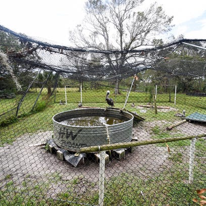 A seriously damaged pelican enclosure is seen Thursday,