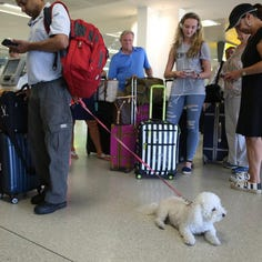 Flying with pets: The cost and other complexities to consider in making your plans