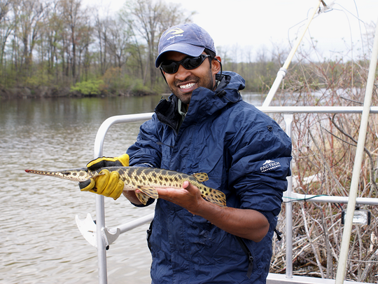 SRD - Field - GREAT LAKES spp - Spotted Gar 1