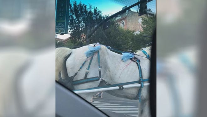 The company that owns this horse was cited for working an underweight animal and failure to provide veterinary care.