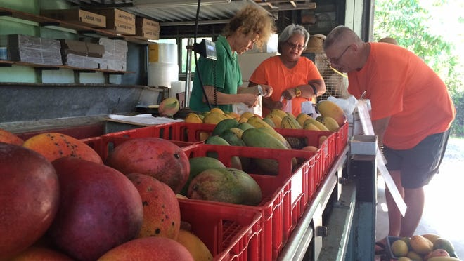 Claudia Reed, left, helps customers at The Mango Factory in Bokeelia.