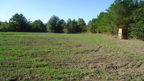 Food plots provide habitat diversity and supplement natural foods.
