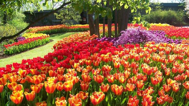 Zoo Blooms begins April 1 at Cincinnati Zoo and Botanical Garden.