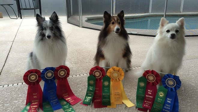 From left are Shelly Lehmann's three rescued dogs – Sago, Sharah and Lulu – shown with their competition ribbons.