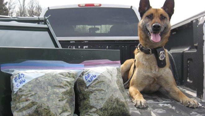 A K9 used as part of a drug bust in Door County Monday.