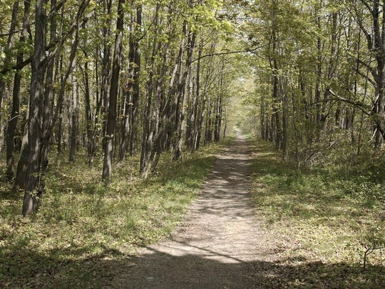 A trail in the Finger Lakes National Forest.
