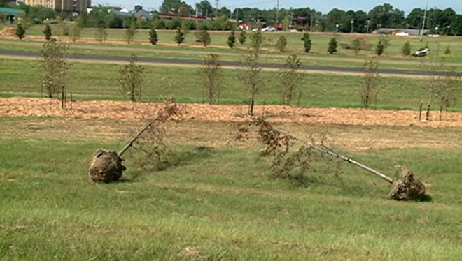 Plants wither along I-20 in Clinton.