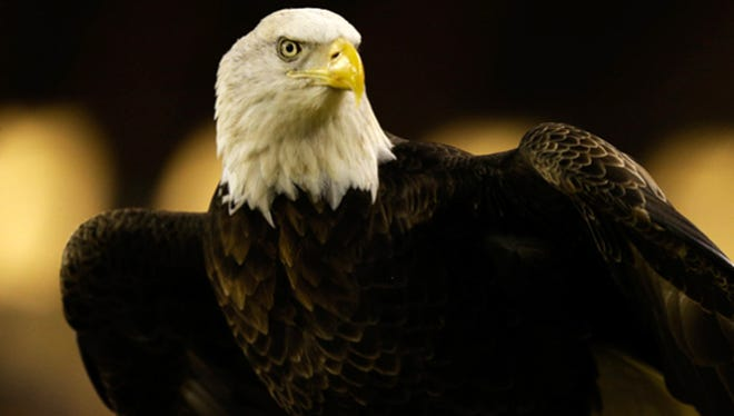 A Long Beach couple has been accused of shooting a bald eagle, also known as the federally protected American eagle.