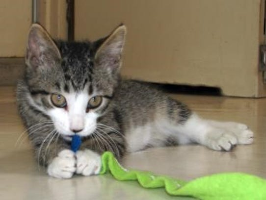 Finn the kitten would like a forever home.