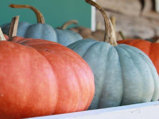 Edible pumpkins for sale at Mountain Home Berry Farm.