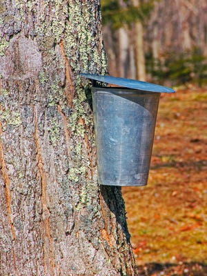 Experiment with producing maple syrup from trees in your own backyard at a maple syrup production program at the Hub at The Port Jervis Free Library.