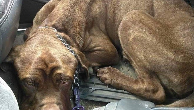 Bacon was rescued from the streets of downtown Detroit, sickly and severely under weight. He died Sept. 29 at the MSU Veterinary Medical Center.