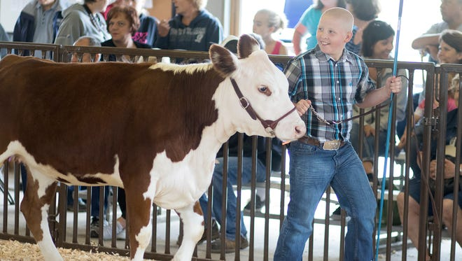 Cody Kaminski, 11, of Rosholt shows off his cow in the beginner showmanship class during the Amherst Fair, Friday, July 15, 2016.