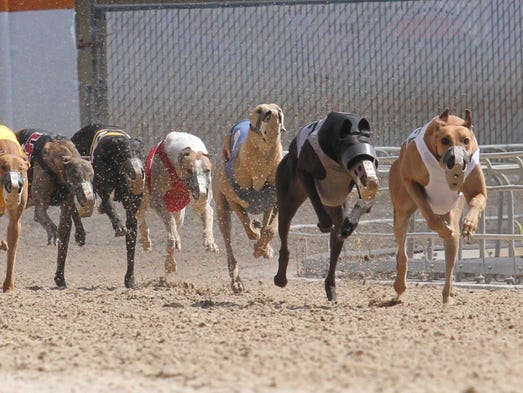 Activists Track Owners Want Fewer Greyhound Races