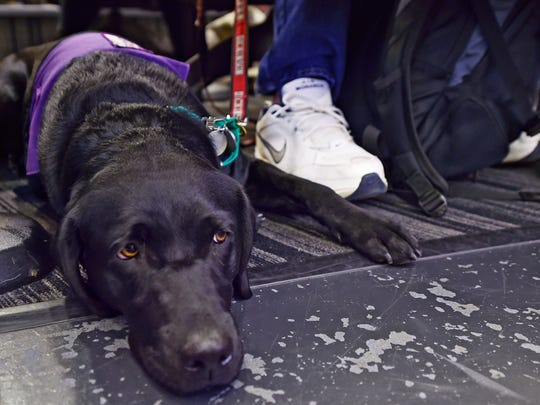 Students involved with the Dickinson Dog House hold a meeting on Oct. 26, 2017 at Dickinson College. Dickinson Dog House is Special Interest House on campus that is run in collaboration with Susquehanna Service Dogs. Students in the club raise service dogs, like SSD Chickadee.