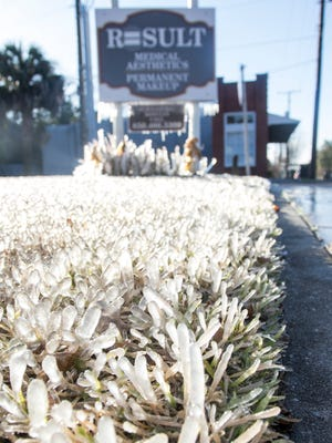 Ice covers a plants and grass as freezing temperatures blanket Pensacola on Wednesday, January 17, 2018.