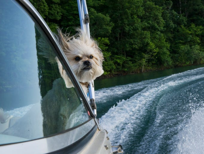 Moe enjoys an evening boat ride on Norris Lake on Wednesday,