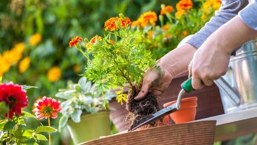Marathon County UW-Extension is offering Master Gardener Volunteer training.