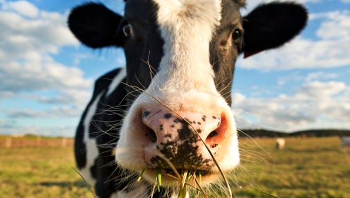 The Blue Water Sierra Club will host a speaker about pollution from confined animal feeding operations.