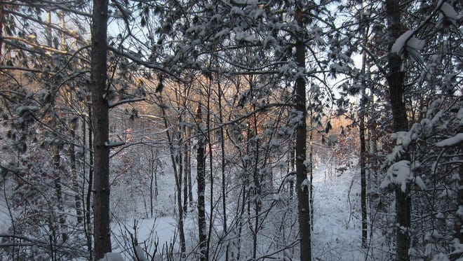 Steve Meurett's view from his hunting blind during the 2014 gun deer season.