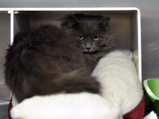 The Cumberland County SPCA says Skippy will need some