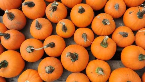 Pumpkins, apples, corn mazes and more in Asheville this fall.