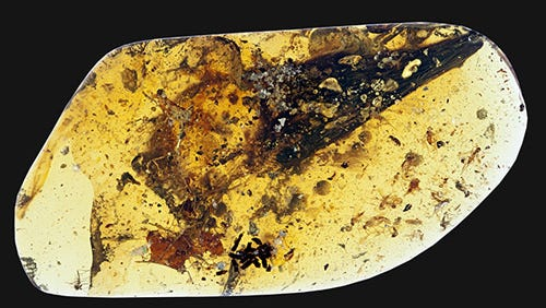 An international team of researchers recently discovered a pair of 99-million-year-old bird wings perfectly preserved in amber.