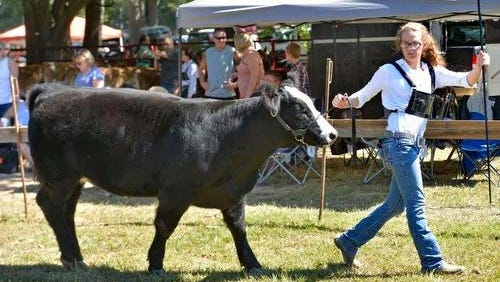 A cow is shown during the 2015 South Greenville Fair in this file photo. This year's Fair is scheduled for Sept. 17.
