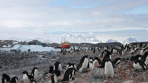 Adelie penguins mill about while the Laurence M. Gould research cruise vessel is docked near Palmer Long Term Ecological Research  station in the Antarctic.