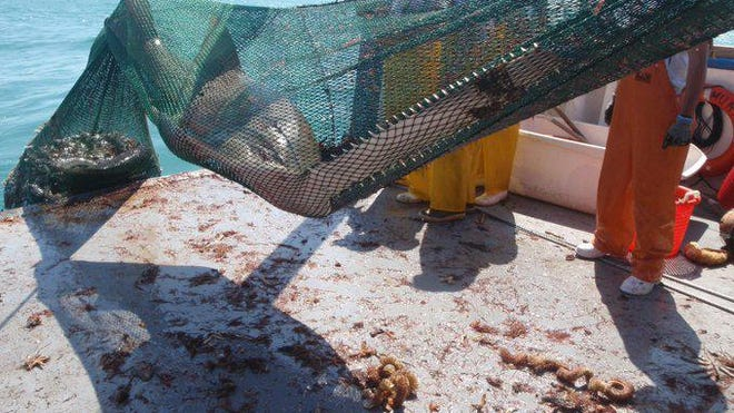 Photo from NOAA Fish Southeast Twitter