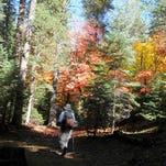 Fall colors paint the Barbershop Trail on the Mogollon Rim.