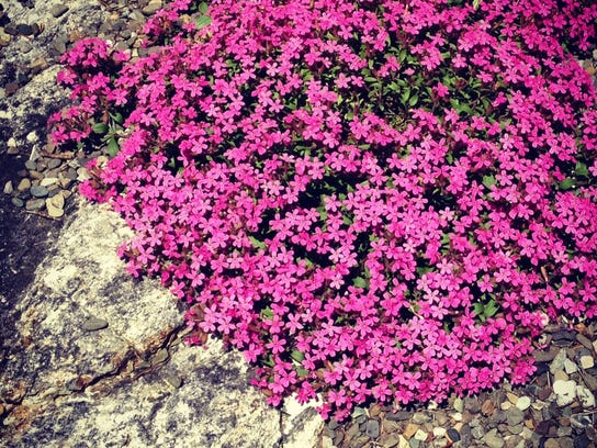 Flowers bloom at Stonecrop Garden, which hosts an Open Days tour starting April 22.
