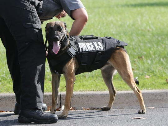 Dover police master corporal Frank Fioravaniti puts a bulletproof vest onto his partner, Gerome, at the Dover Police Department Wednesday.  Dover police recently received two bulletproof K9 vests through donation.