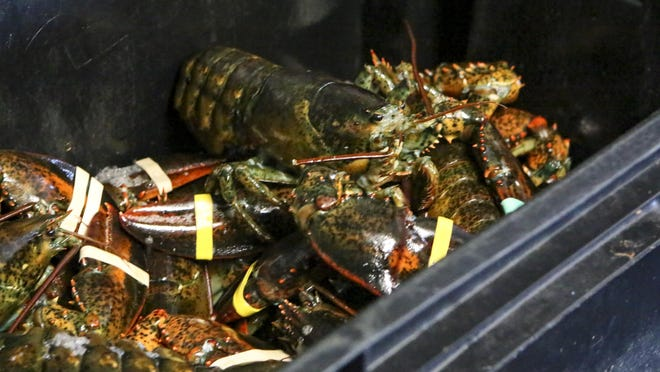 Lobsters wait for customers at Sakonnet Lobster in Little Compton.