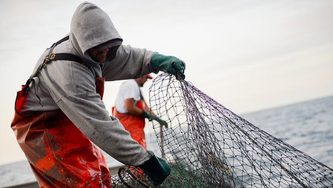 Tom Burleson, in rear, and Josh Freeman pull a fishing net from more than 100-foot depths in Lake Huron aboard the commercial fishing vessel called The Monty Pit on Tuesday, Oct. 4, 2016. The net is pulled within a close distance of the boat, then the fish are scooped from the net and distributed to belowdecks tanks full of water and ice.