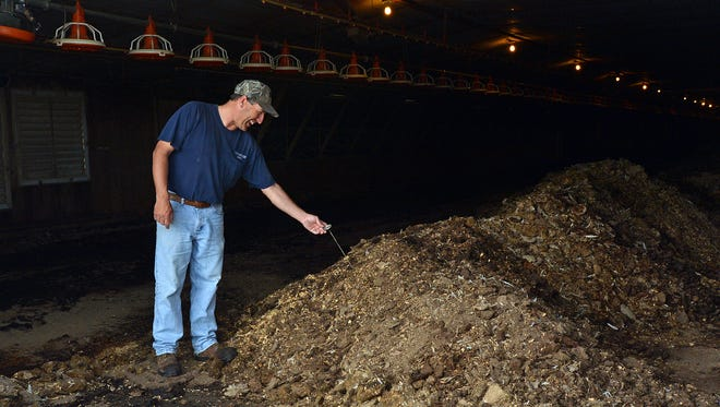 Willards farmer Lee Richardson checks the temperature of windrowed manure in one of his chicken houses.