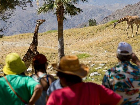 World Giraffe Day at The Living Desert