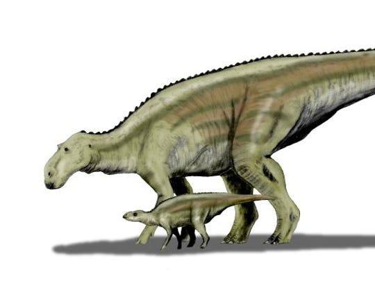 Maiasaura peeblesorum, a hadrosaur from the Late cretaceous of Montana.